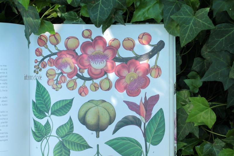 Botanicum di Katie Scott e Kathy Willis - interno storie