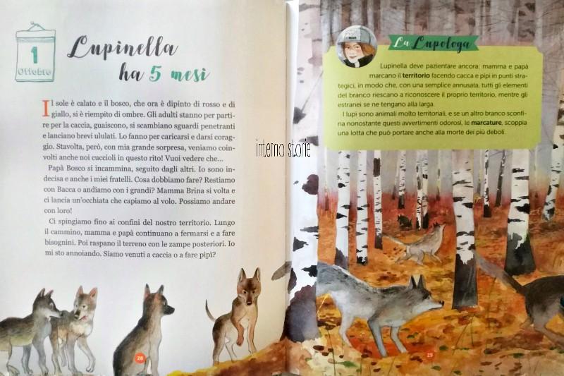 Storie di boschi - Lupinella - interno storie