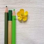 Matite - I fiori - interno storie