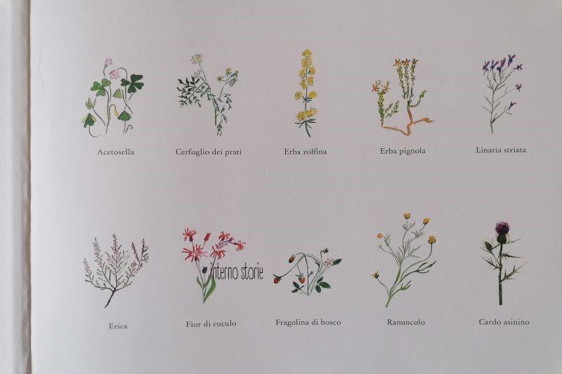 Matite - i fiori - Cerfoglio - interno storie